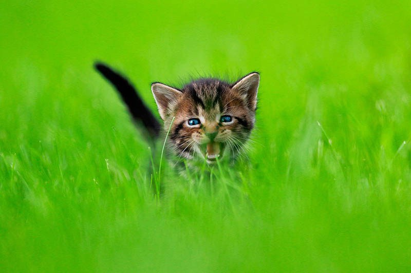 pounce-new-kitten-book-by-seth-casteel-vinegret-8