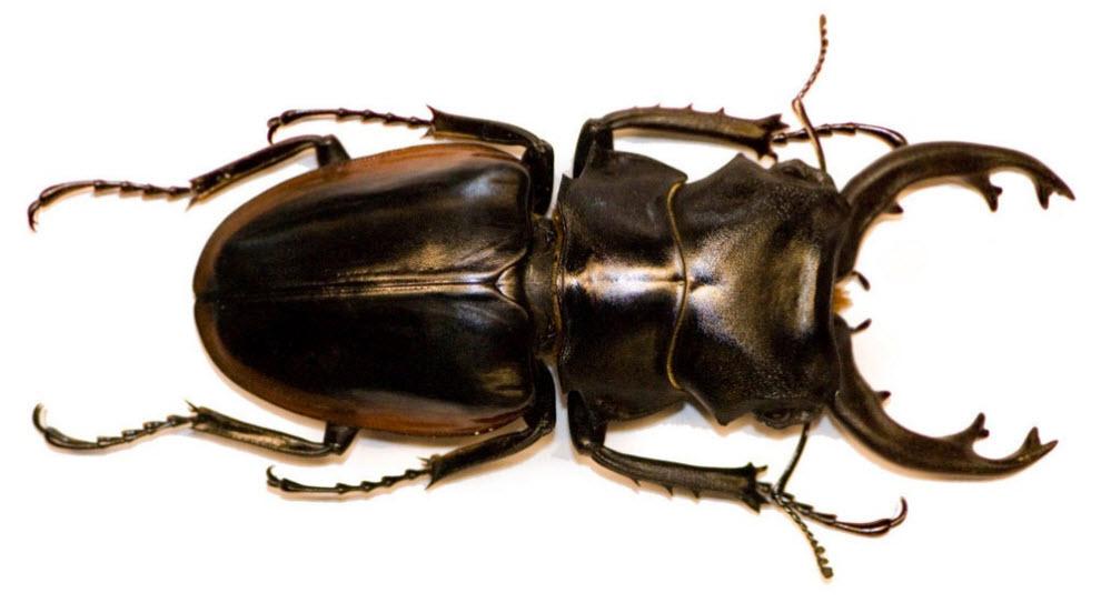 новый beetle фото