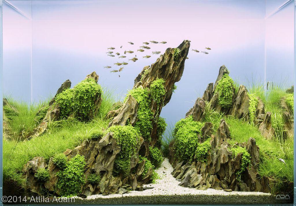 akvarium-10