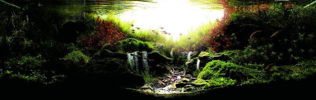 akvarium-19