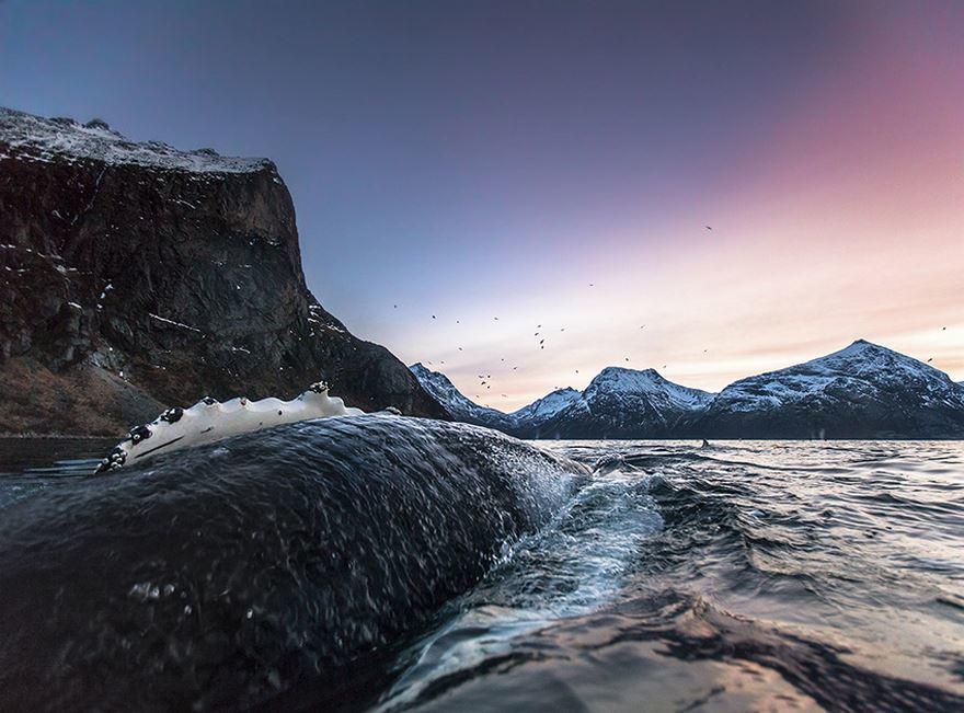 arctic-whales-photography-audun-rikarsen-2-582abc7bf11a5__880
