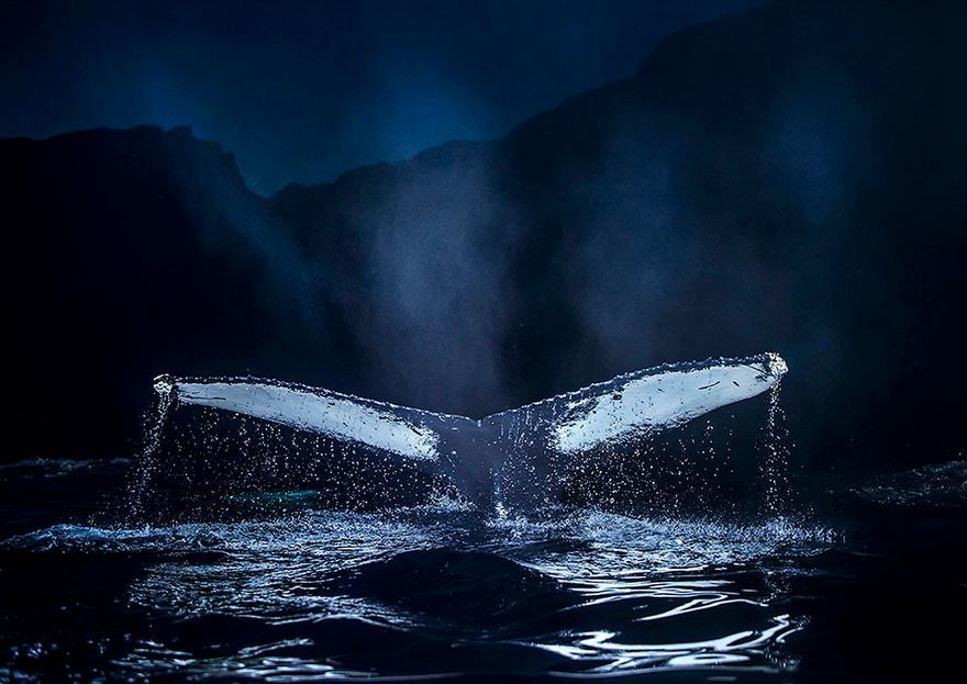 arctic-whales-photography-audun-rikarsen-8-582abc8b1501e__880