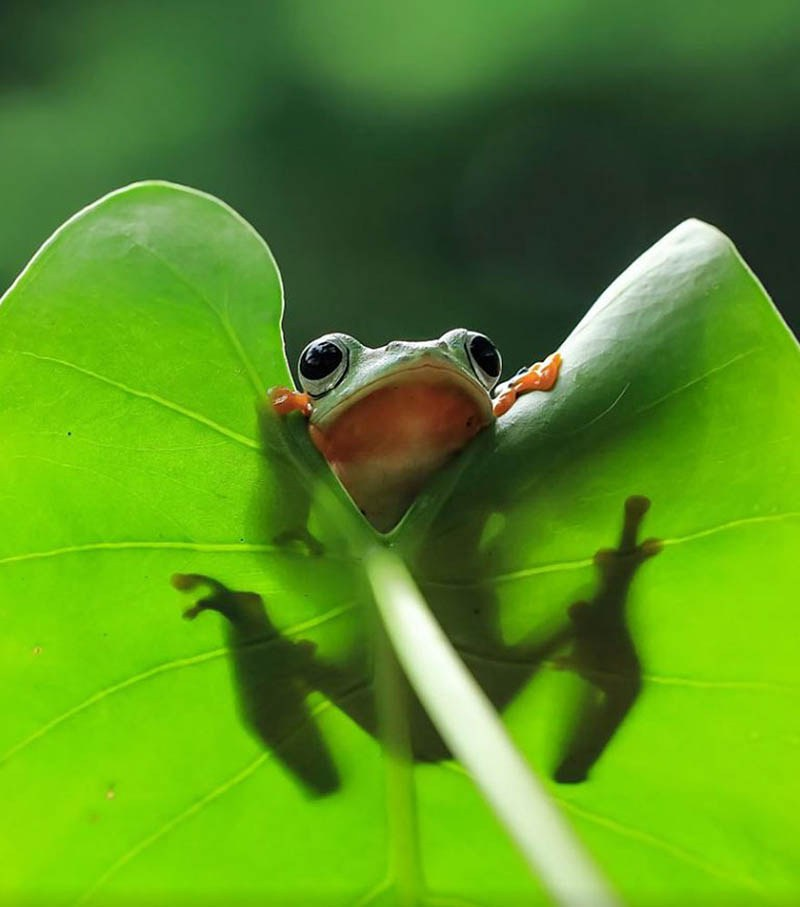 frog-photography-tanto-yensen-vinegret-16