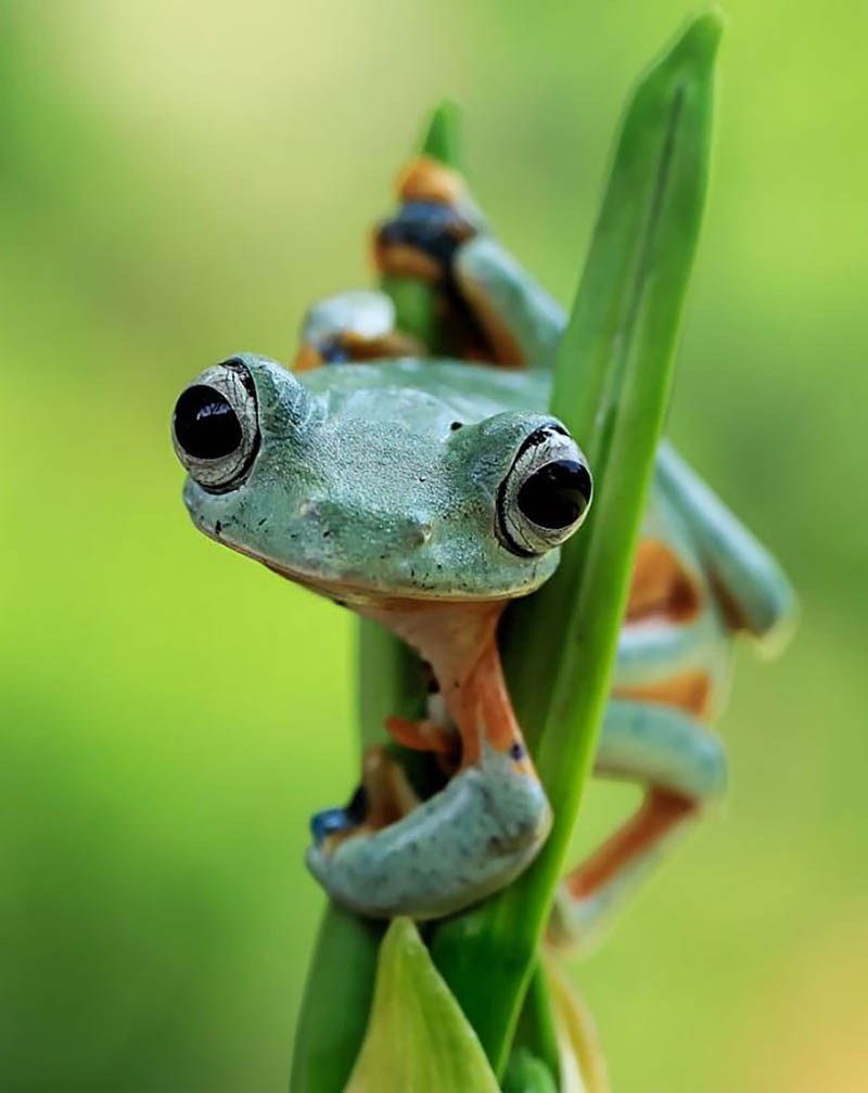 frog-photography-tanto-yensen-vinegret-18-1
