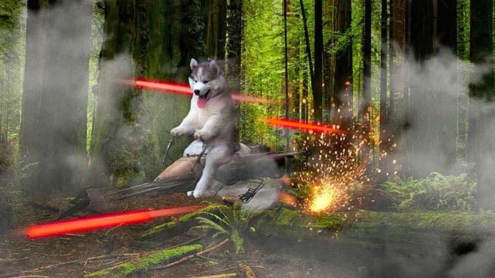husky-tree-photoshop-battle-vinegret-4