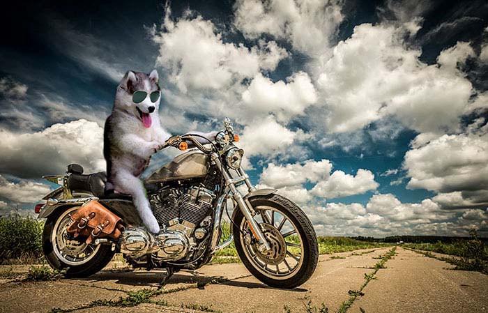 husky-tree-photoshop-battle-vinegret-6