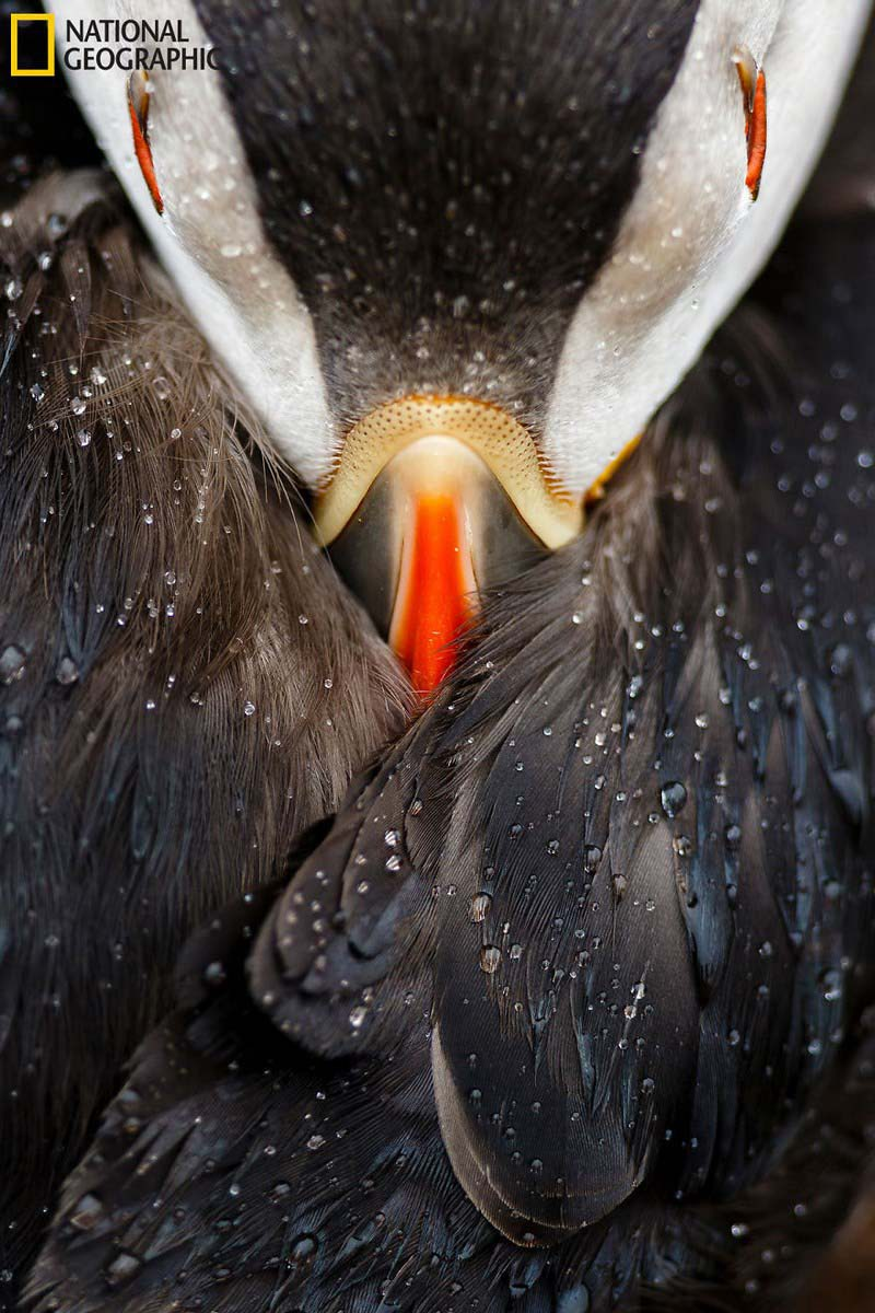 national-geographic-nature-photographer-of-the-year-finalists-2016-2-vinegret-2