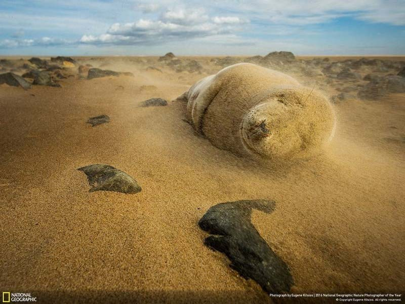 national-geographic-nature-photographer-of-the-year-finalists-2016-2-vinegret-21