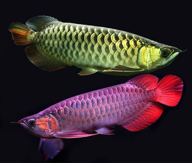 samaya-dorogaya-ryba-v-mire-4