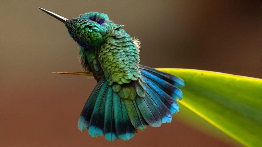 Крошечный колибри