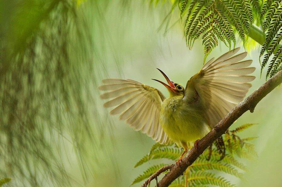 Птицы. Размножение, развитие, анатомия и физиология, классификация птиц