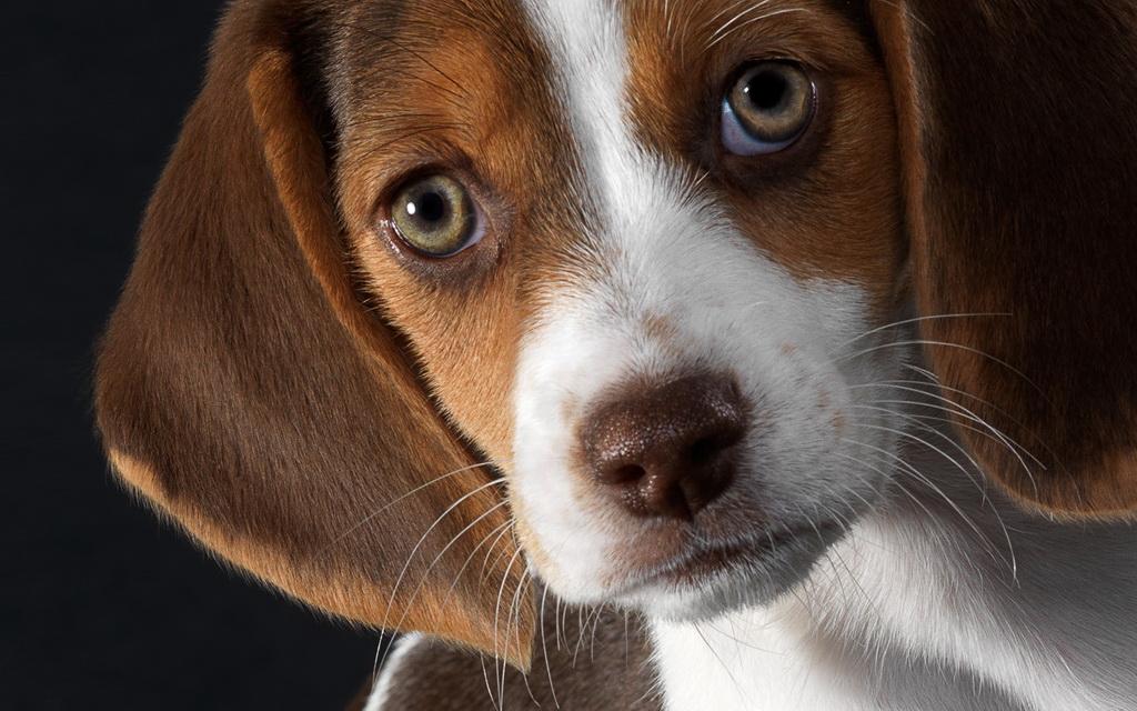 4 породы собак, которые идеально уживаются с детьми в 2019 году