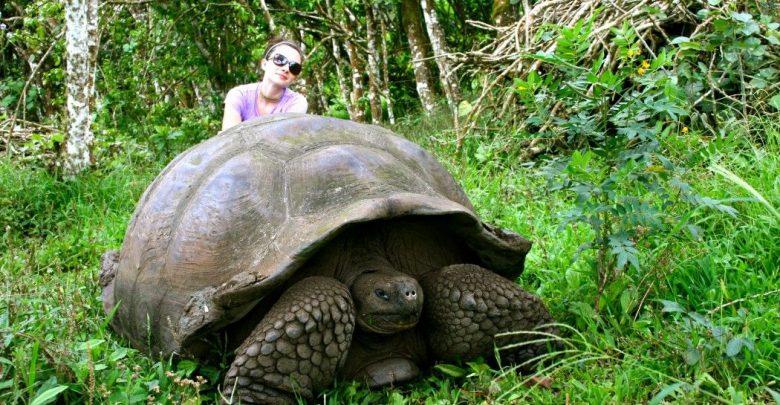 Галапагосская слоновая черепаха