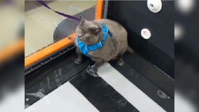 Кошка Синдерблок бодипозитивщица