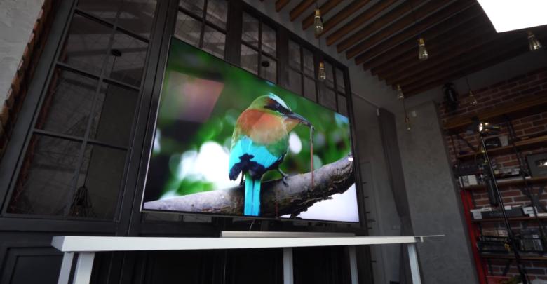 животное на экране телевизора
